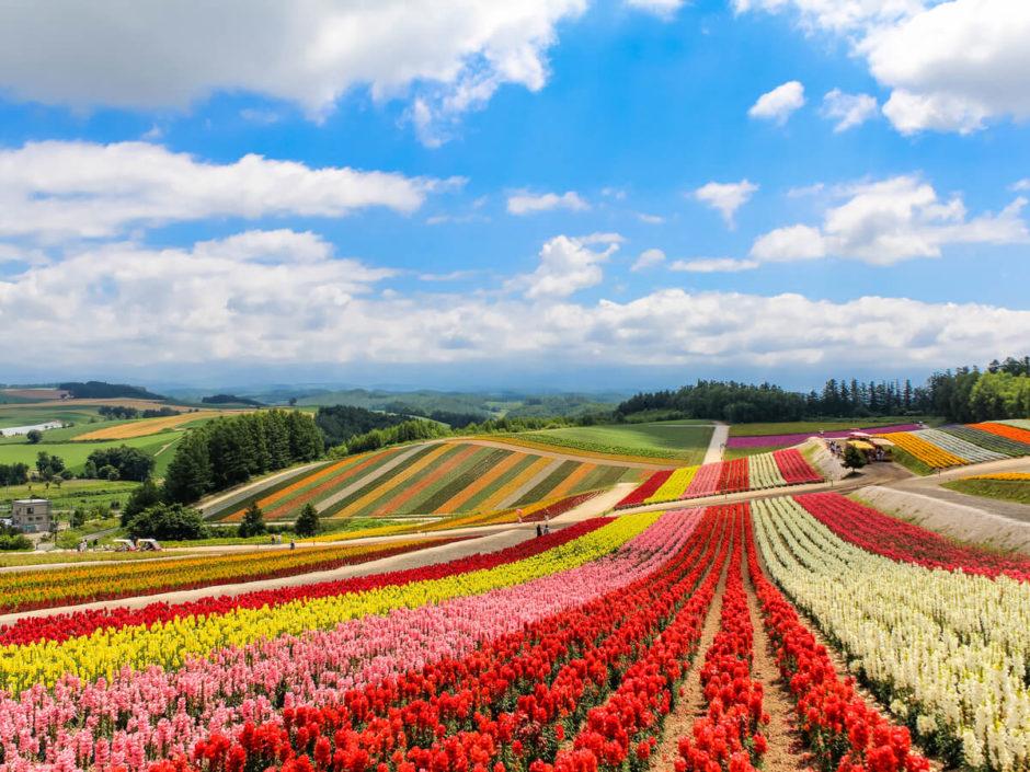 北海道 観光 おすすめ