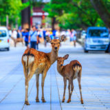 奈良県 観光 おすすめ