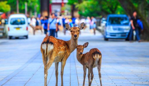 奈良県観光おすすめ10選!歴史巡りや鹿との思い出作りをしよう