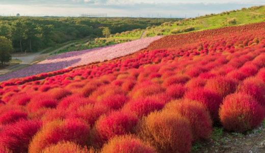 茨城県観光おすすめ10選!都道府県魅力度ランキング最下位の知られざる魅力を大公開