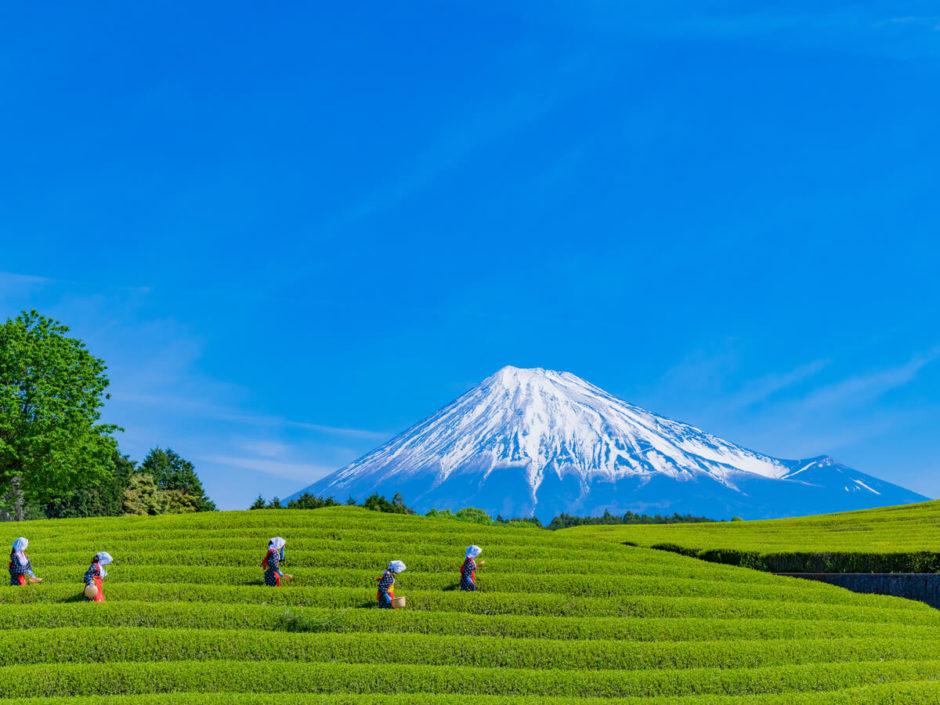 静岡県 観光 おすすめ